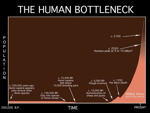 population bottleneck