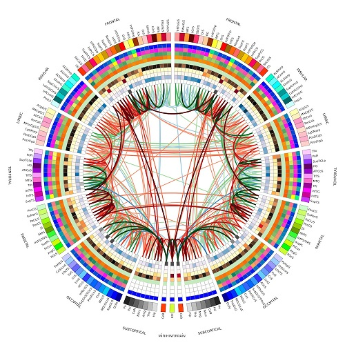 image-4-wikipedia-Double_Connectogram-final