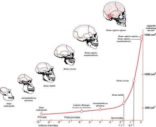 brainEvolution