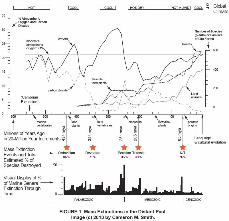 evolution and extinction essay