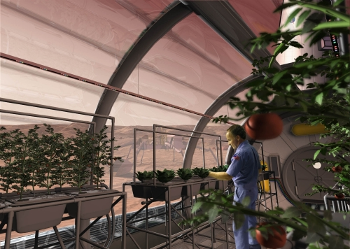 potatoes_in_space_greenhouse